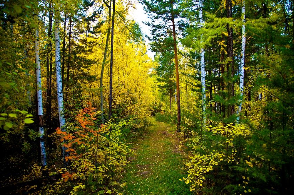 Проект освоения лесов